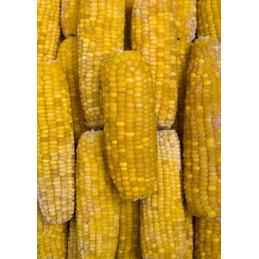 Kukuřice klasy mražená 10kg